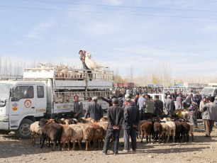 Kashgar animal market | Jan, 2016