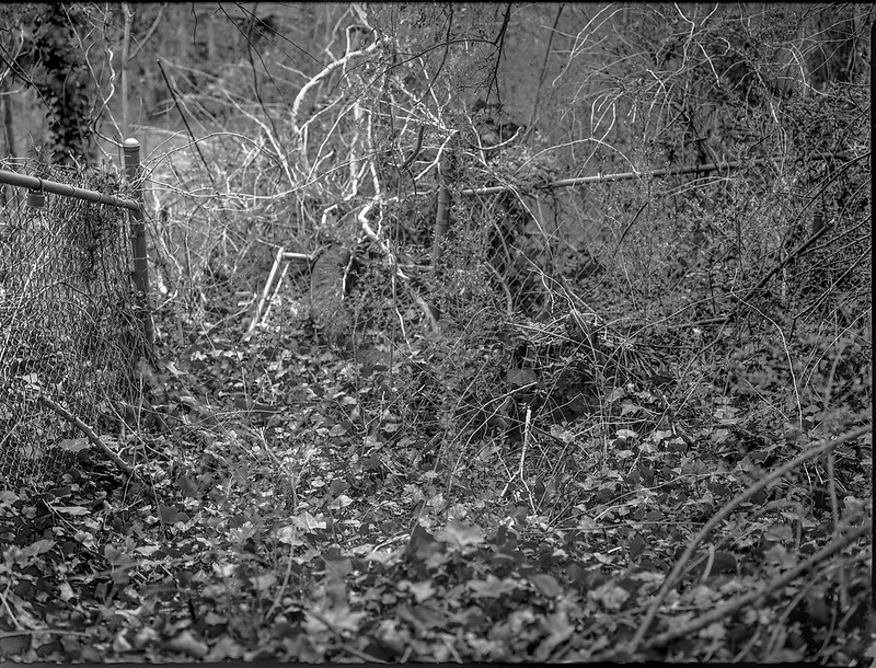 urban forest, decay, wire fence, tangled vines, North Asheville, NC, Mamiya 645 Pro, mamiya sekor 80mm F-2.8, 3.20.18