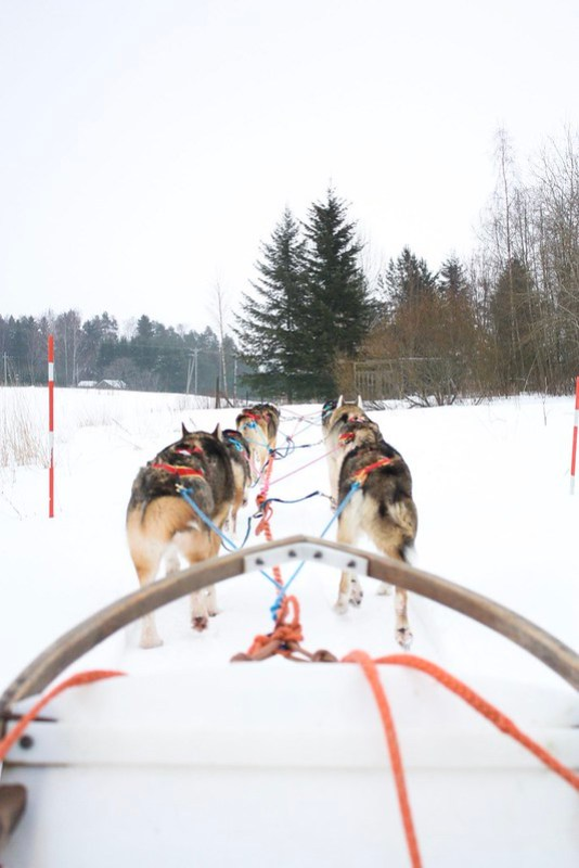 Husky Safari in Tampere