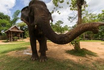 populair in LP zijn de mahout trainingen