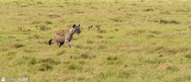 Kenya - 0394