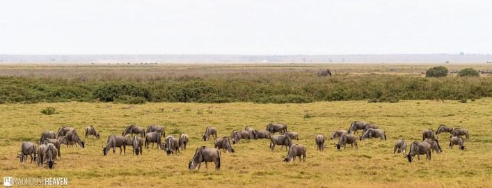 Kenya - 0285
