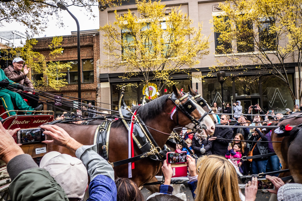 Budweiser Clydesdales come to Greenville-012