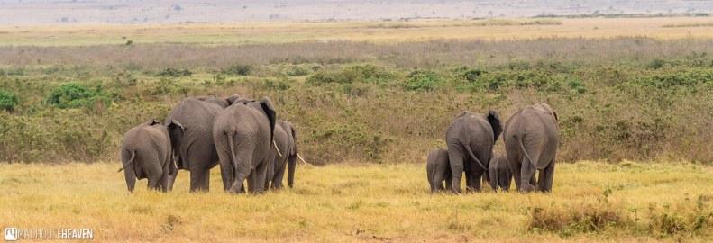 Kenya - 0287