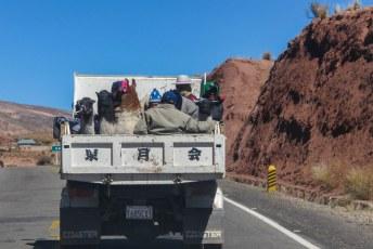 Mens en dier reist gezellig samen in Bolivia.