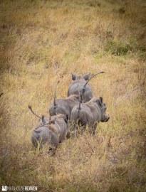 Kenya - 0748