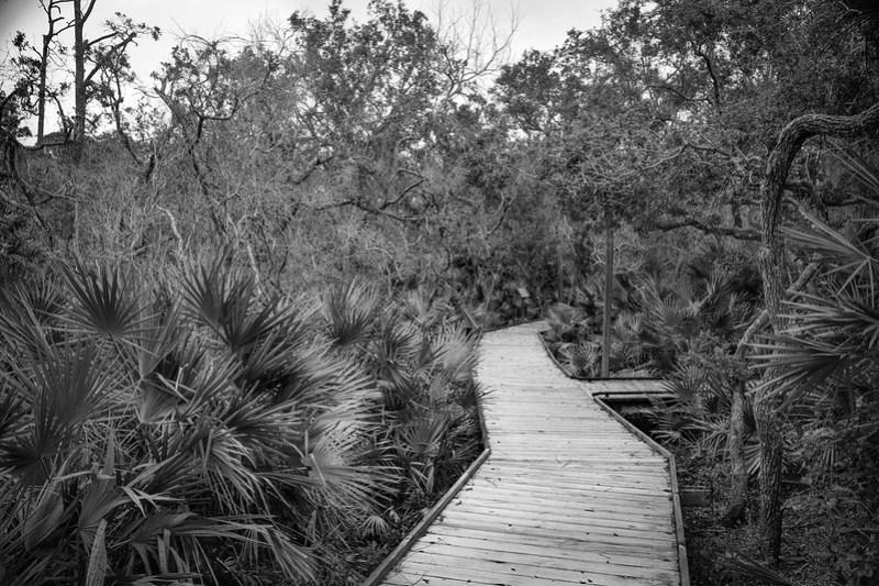 raised walkway, dense vegetation, Atlantic Center for the Arts, New Smyrna Beach, FL, Nikon D3300, Sigma 18-50mm f-2.8 EX DC MACRO, 2.4.19