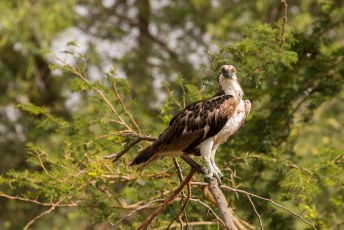 Vlakbij Saly is een safaripark, waar de beesten nogal verbaasd waren dat wij kwamen kijken.