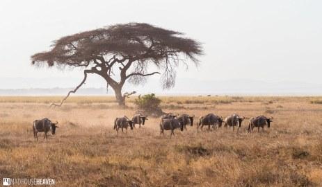 Kenya - 0037
