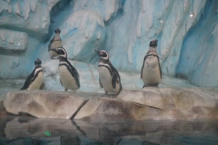 2017 CCA investigation into Wuyishan Tianhong Polar Ocean World