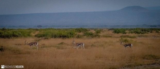 Kenya - 0212