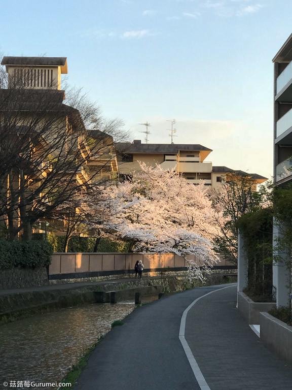 打工度假-京都生活-賞花、野餐-091