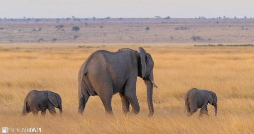 Kenya - 0179