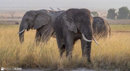 Kenya - 0100