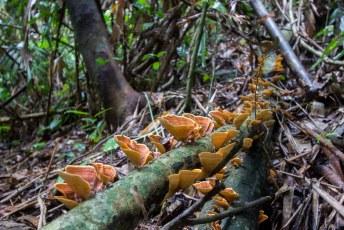 de rafflesia is wel familie van deze jongens