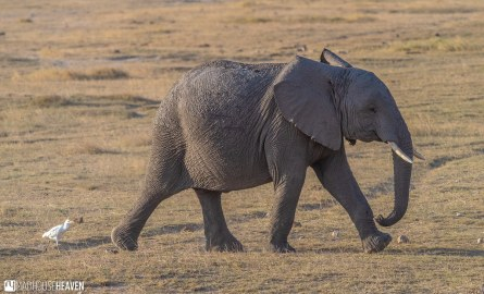 Kenya - 0050
