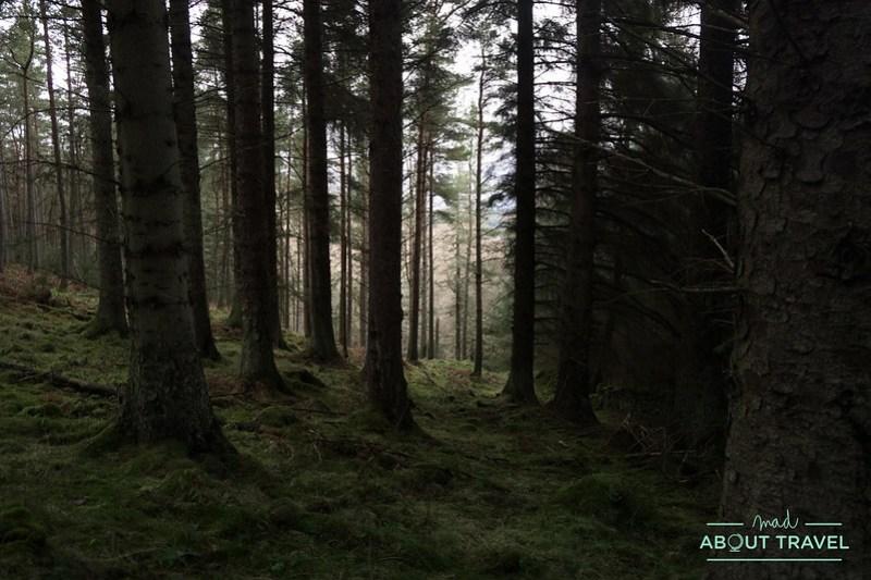 Cardrona-forest-polonez-07