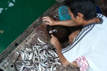 Besuch Pangasius Fischzucht 12