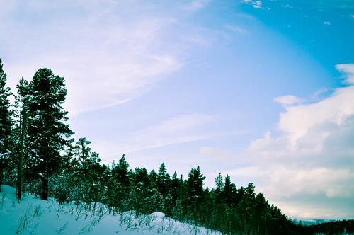 Treelined sky