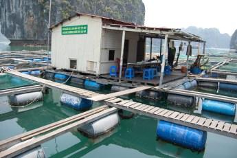 Besuch Pangasius Fischzucht 29