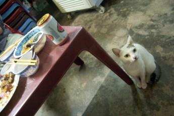 Katze will Essen