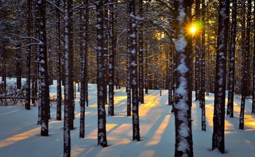 Trekking home through the woods
