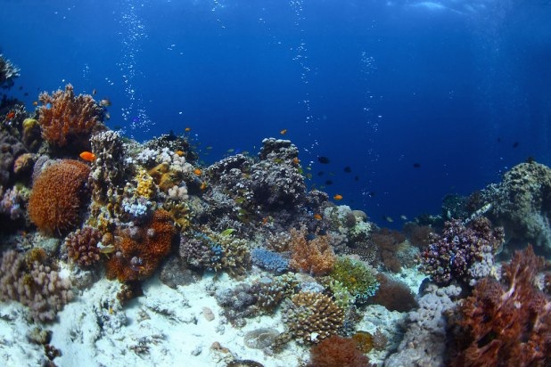 Fondo marino Balicasag