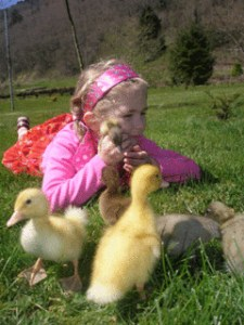 Nina with ducklings