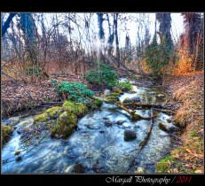 The slow river in the forest - HDR - River park - Cuneo - Italy