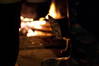 Katze am Feuer