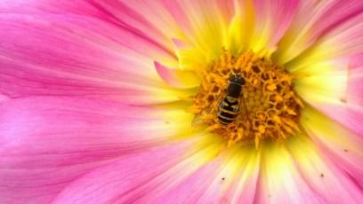 Nokia Lumia 1020 - Pollination