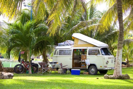 Palm tree campground