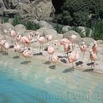 Oceanografic Miguel, aves 05