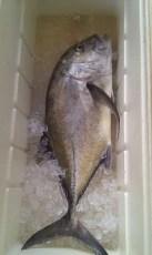 Lastnights catch 20.9 makai killaz.