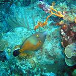 Reeffish vol1.01 (56)
