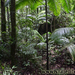 06 Viajefilos en Australia, Eungella NP 024