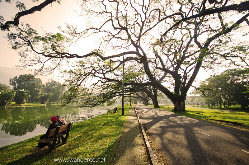 spectacular raintrees of taiping