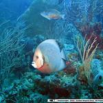 Reeffish vol1.01 (31)