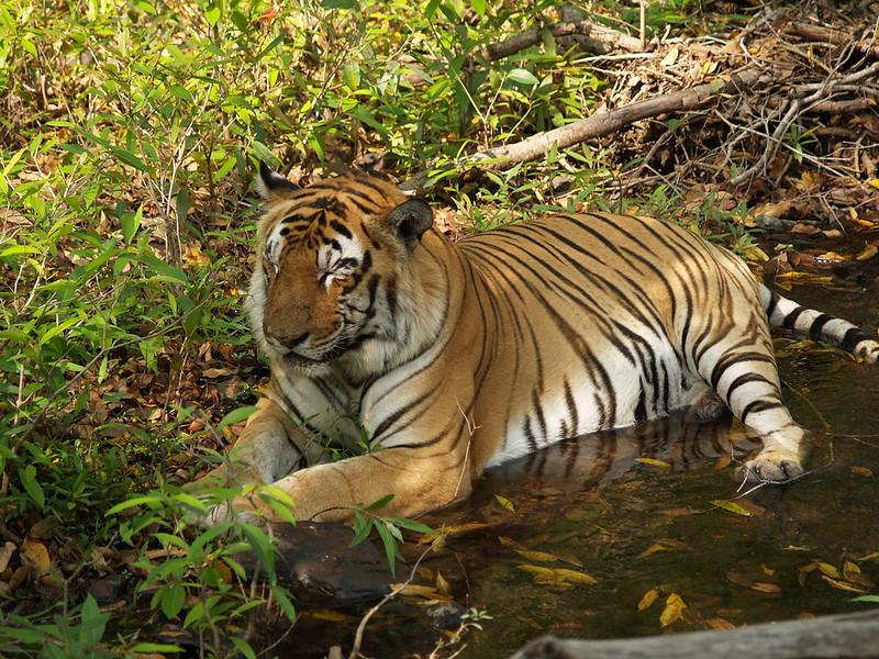 Khawnglung Wildlife Sanctuary
