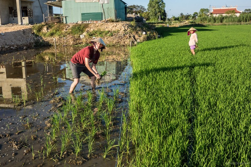 2013-06-09 Planting Rice - DSC05182-FullWM