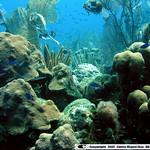 Reeffish vol1.01 (20)