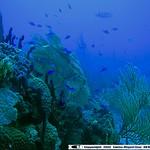 Reeffish vol1.01 (21)