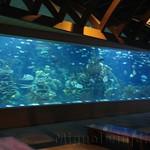 Oceanografic Miguel, acuario 02