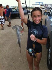 Deanarose's first hammer head shark.