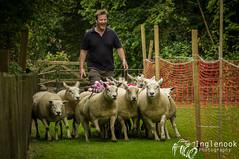 Roughlee Sheep Race