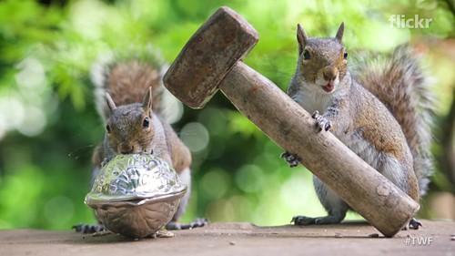 Capturing the secret lives of squirrels