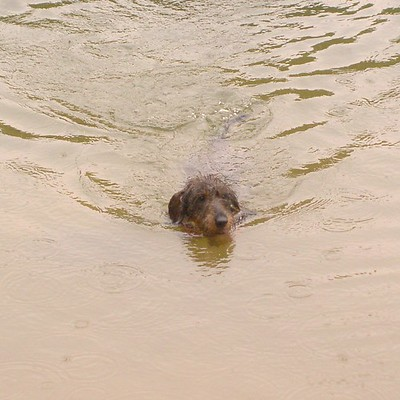 dogs swim