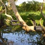 02 Viajefilos en Australia, Kakadu NP 093