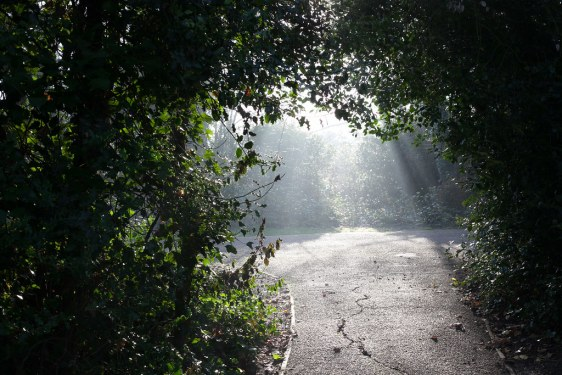 The end of the shaded path