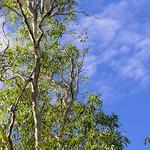 02 Viajefilos en Australia, Kakadu NP 060
